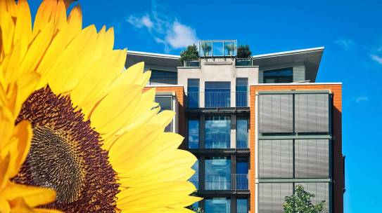 From sunflower to innovation. How the company SolarGaps emerged from an idea